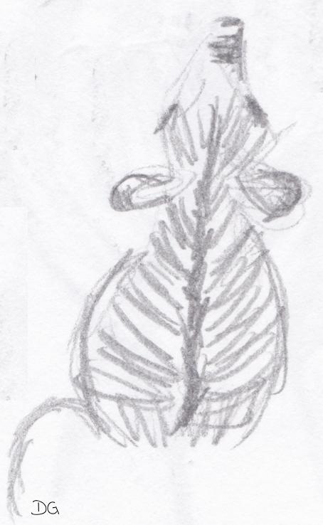 zebra-sitting-portfolio