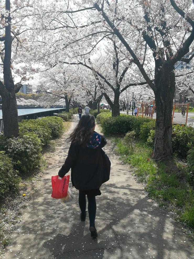 Hanami in Osaka Japan